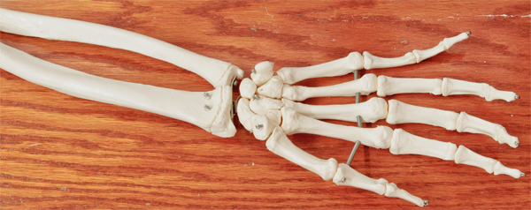 Unlabeled Hand Bones | www.imgkid.com - The Image Kid Has It!